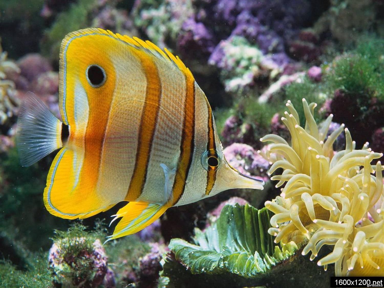 Морские животные каталог статей мир